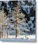 Frost Covered Trees On The Portage Glacier Highway Alaska Metal Print