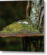 Fungi 4648 Metal Print