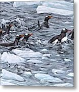 Gentoo Penguins By Alan M Hunt Metal Print