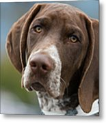 German Shorthair Pointer With Building Metal Print