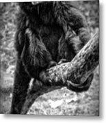 Gibbon Metal Print
