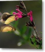 Glowing Wings Of A Hummingbird Metal Print