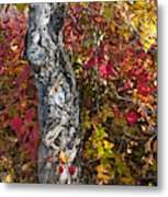 Gnarled Tree Trunk - Dezadeash Lake - Yukon Territory  Metal Print