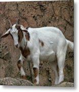 Goat Print 9245 Metal Print
