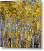 Golden Aspen Grove Metal Print