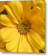 Golden Daisy Metal Print