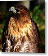 Golden Eagle Portrait Metal Print