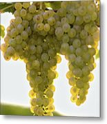 Golden Wine Metal Print