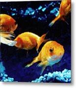 Goldfish In Fish Tank Metal Print
