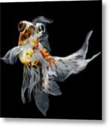 Goldfish Isolated On Black Background Metal Print