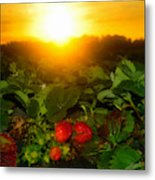 Good Morning Strawberries Metal Print