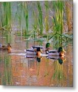 Got My Ducks In A Row Metal Print