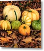 Gourds Grounded Metal Print