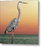Great Blue Heron In Seaside Sunset Metal Print