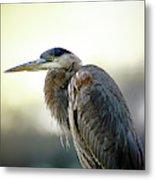 Great Blue Heron Portrait Metal Print