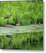 Great Blue Heron Square Metal Print
