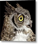 Great-horned Owl Metal Print