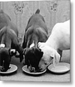 Greedy Pup Metal Print