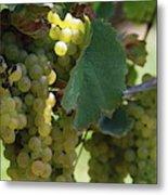 Green Grapes On The Vine 10 Metal Print