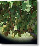 Green Grapes On The Vine 16 Metal Print