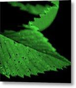 Green Leaf in Sun Metal Print