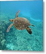 Green Sea Turtle, Big Island, Hawaii Metal Print