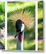 Grey Crowned Crane Gulf Shores Al Collage 2 Triptych Metal Print