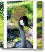 Grey Crowned Crane Gulf Shores Al Collage 6 Triptych Metal Print