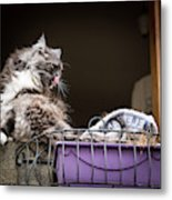 Grey Long Haired Cat Sitting On A Window Sill Metal Print