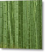 Grove Of Bamboo Trees Phyllostachys Metal Print
