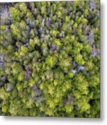 Grove Of Pines Aerial Metal Print