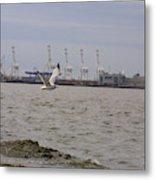 Gull In Flight On New Jersey Bay Metal Print