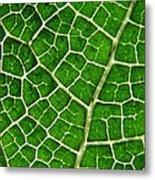 Gunnera Manicata Leaf Metal Print