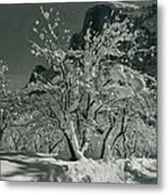 Half Dome, Apple Orchard, Yosemite Metal Print