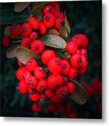 Happy Berries Metal Print