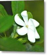 Hawaiian Gardenia Metal Print