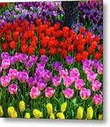 Hidden Garden Of Beautiful Tulips Metal Print