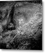 Hiding In The Rocks Metal Print