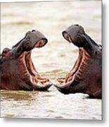 Hippopotamus Metal Print