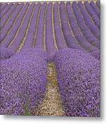 Hitchin Lavender Metal Print