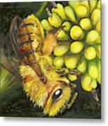 Honey Bee On Wild Golden Glow Metal Print