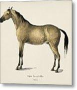 Horse  Equus Ferus Caballus  Illustrated By Charles Dessalines D' Orbigny  1806-1876  Metal Print