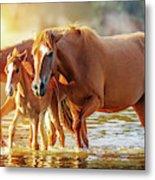 Horse Family Walking In Lake At Sunrise Metal Print