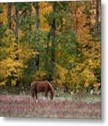 Horse In Fall Metal Print