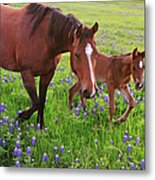 Horse On Bluebonnet Trail Metal Print