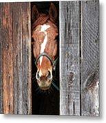 Horse Peeking Out Of The Barn Door Metal Print