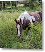 Horse Print 578 Metal Print