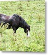 Horse Print 828 Metal Print