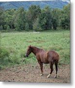 Horse Print 900 Metal Print