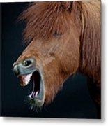 Horse Showing Teeth, Laughing Metal Print